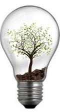 ampoule_arbre.jpg