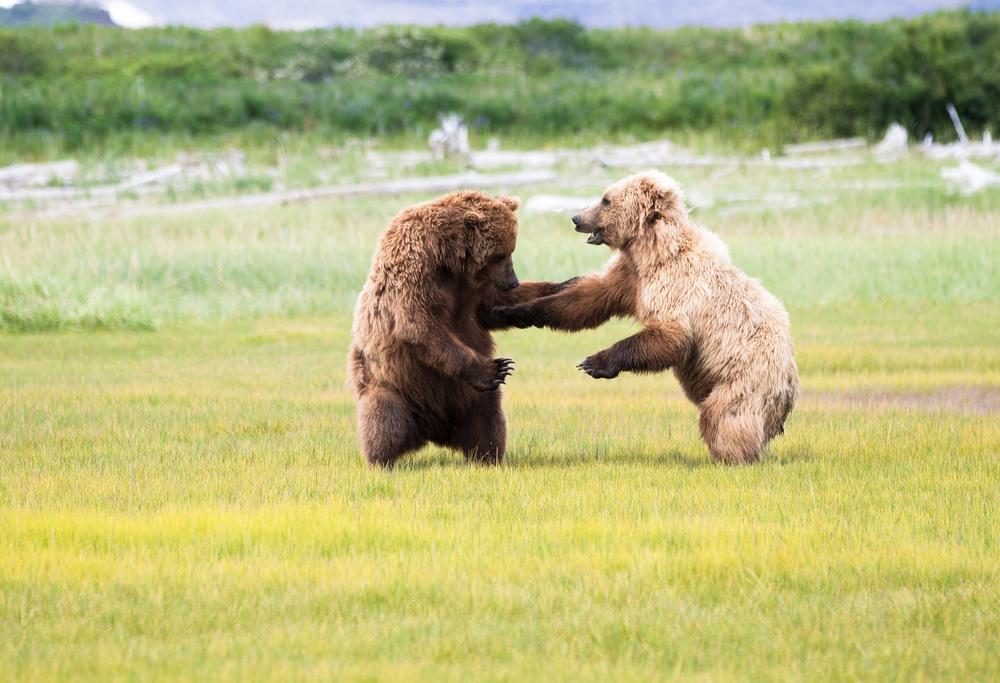 20120723-Bears 2012_20120723_9_73.jpg