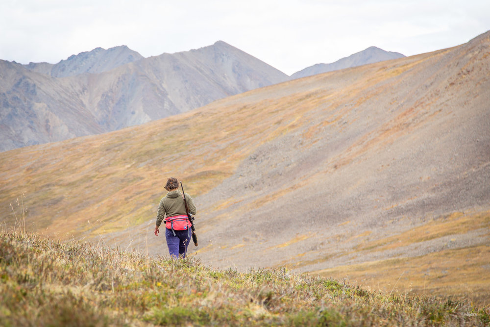 Sarah Marie walks back to her bike after a successful caribou hunt.