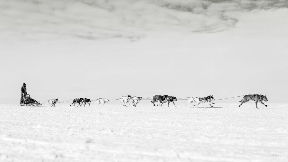 Kobuk 440 Sled Dog Race