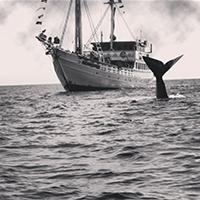 whaletale.jpg