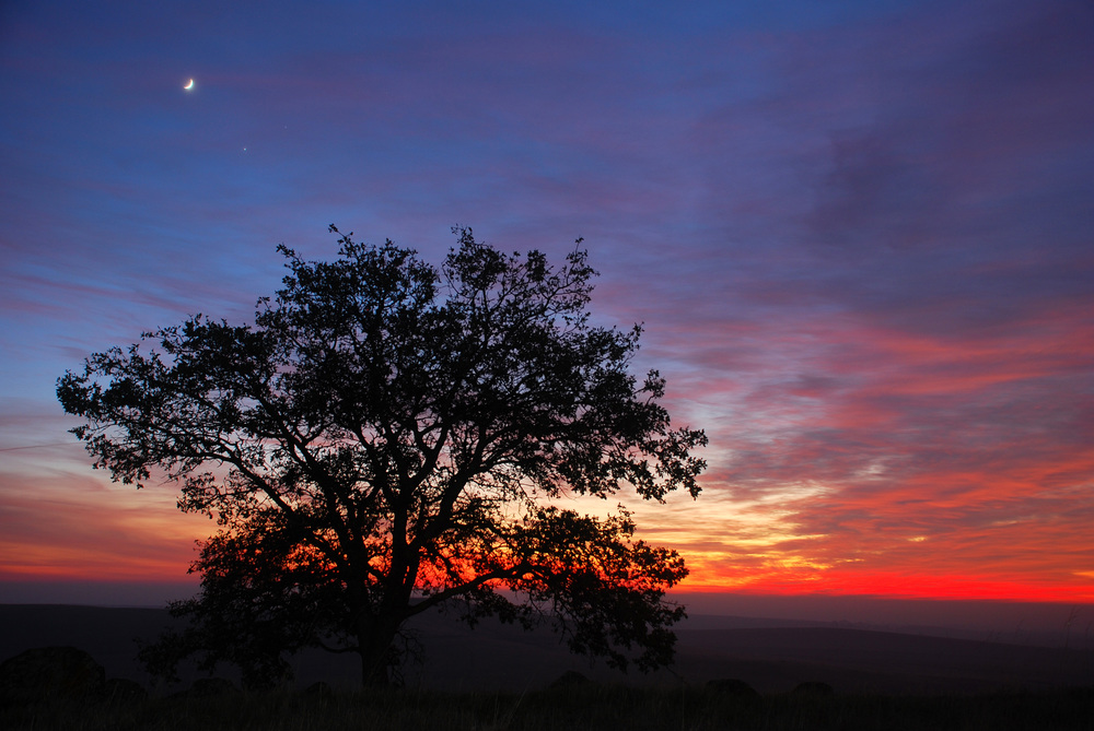 EDH sunset with moon and oak 1-2.jpg