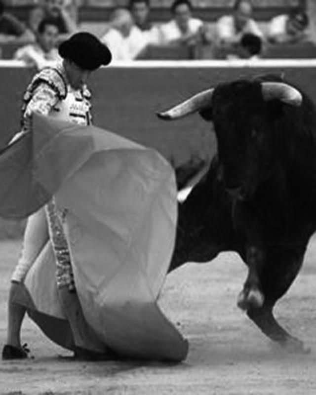bull2 copy.jpg