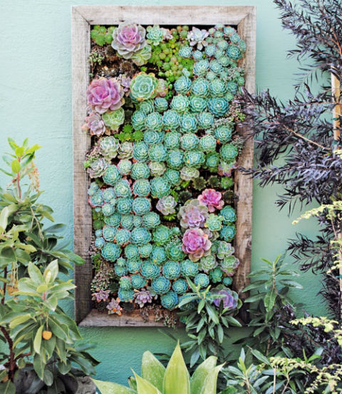 Succulents - Paige's Picks, The Vintage Round Top