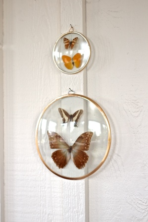 BUTTERFLY GLASS DOMES, THE VINTAGE ROUND TOP