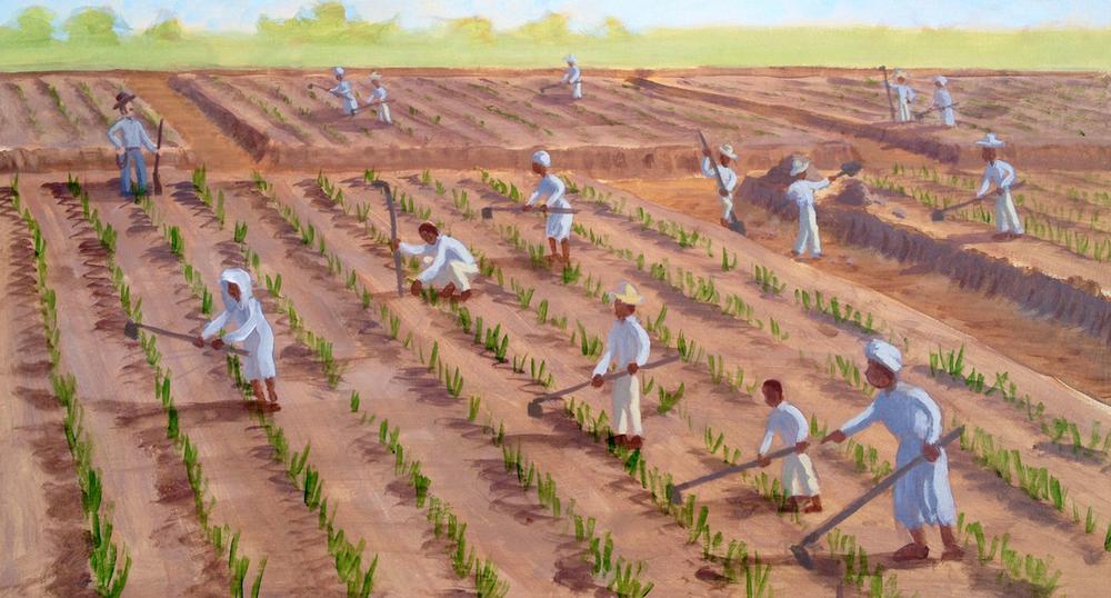 GuineaSam_ricePlantation_web.jpg