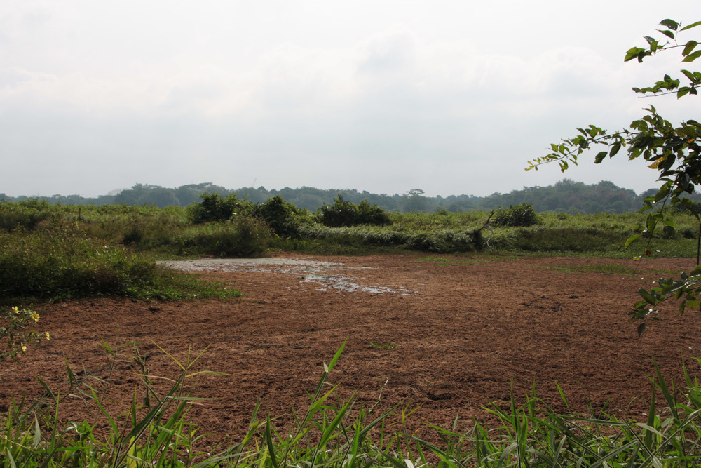 Kranji Marshes dry