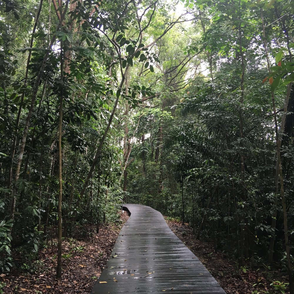 Forest Boardwalk - Learning Forest at Singapore Botanic Gardens by SCLD
