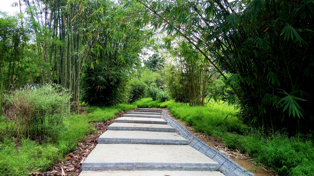 View of path through the Bamboosetum at the Learning Forest Singapore Botanic Gardens. Photo by Stephen Caffyn Landscape Design