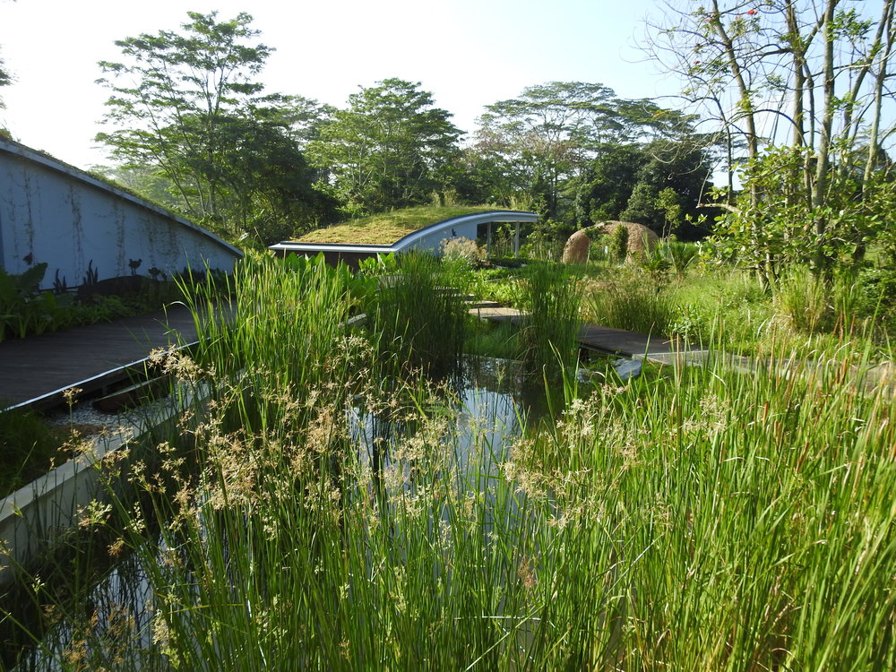 Marsh Pond and Green Roofed Shelter at Kranji Gateway area