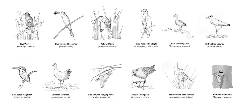 SCLD's hand drawn Sketches of Birds selected as the Signature Species for Kranji Marshes