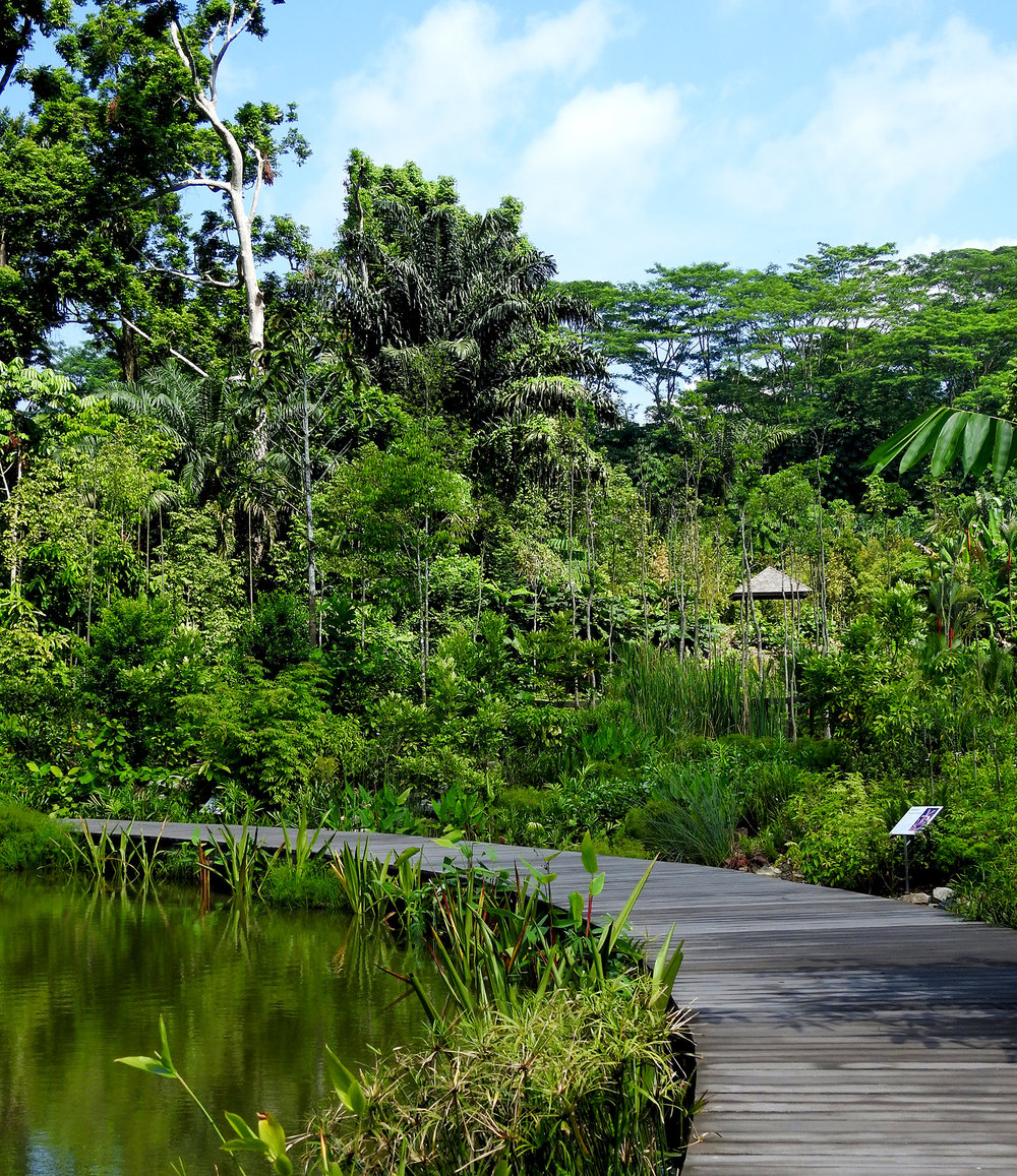The Learning Forest at Singapore Botanic Gardens is Awarded the