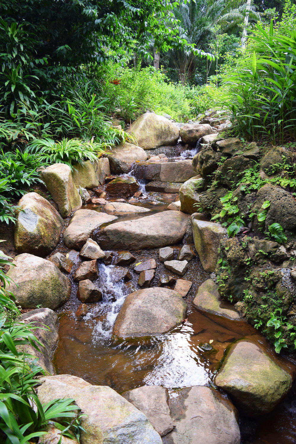 The Dell Cascade is hidden away below the Learning Forest and is only visible from the Dell area of Singapore Botanic Gardens.