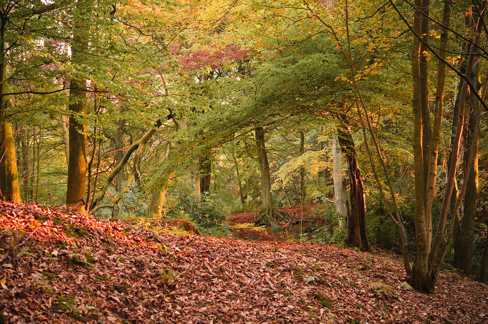 large-autumn-woods.jpg