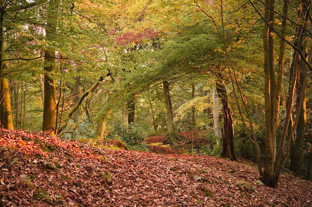large-autumn-woods.jpg
