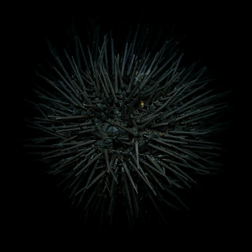 Truc-Anh_2010_88-Doors