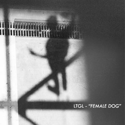 LTGL - Female Dog