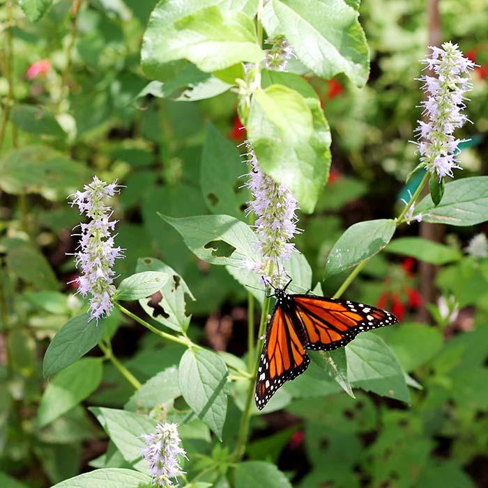 butterfly_orange1.jpg