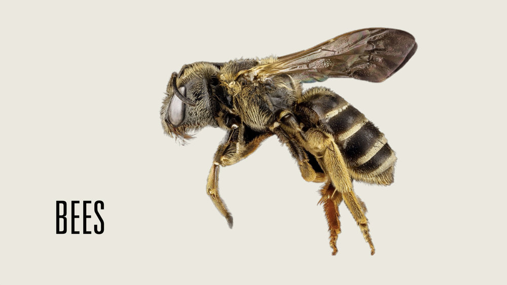 Bee Population Decline
