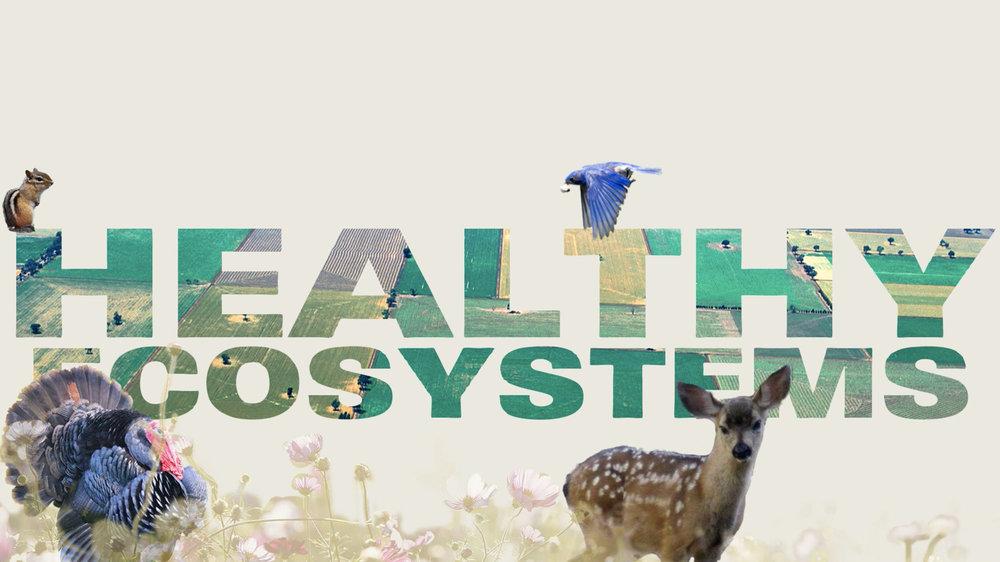 ecosystems.jpg