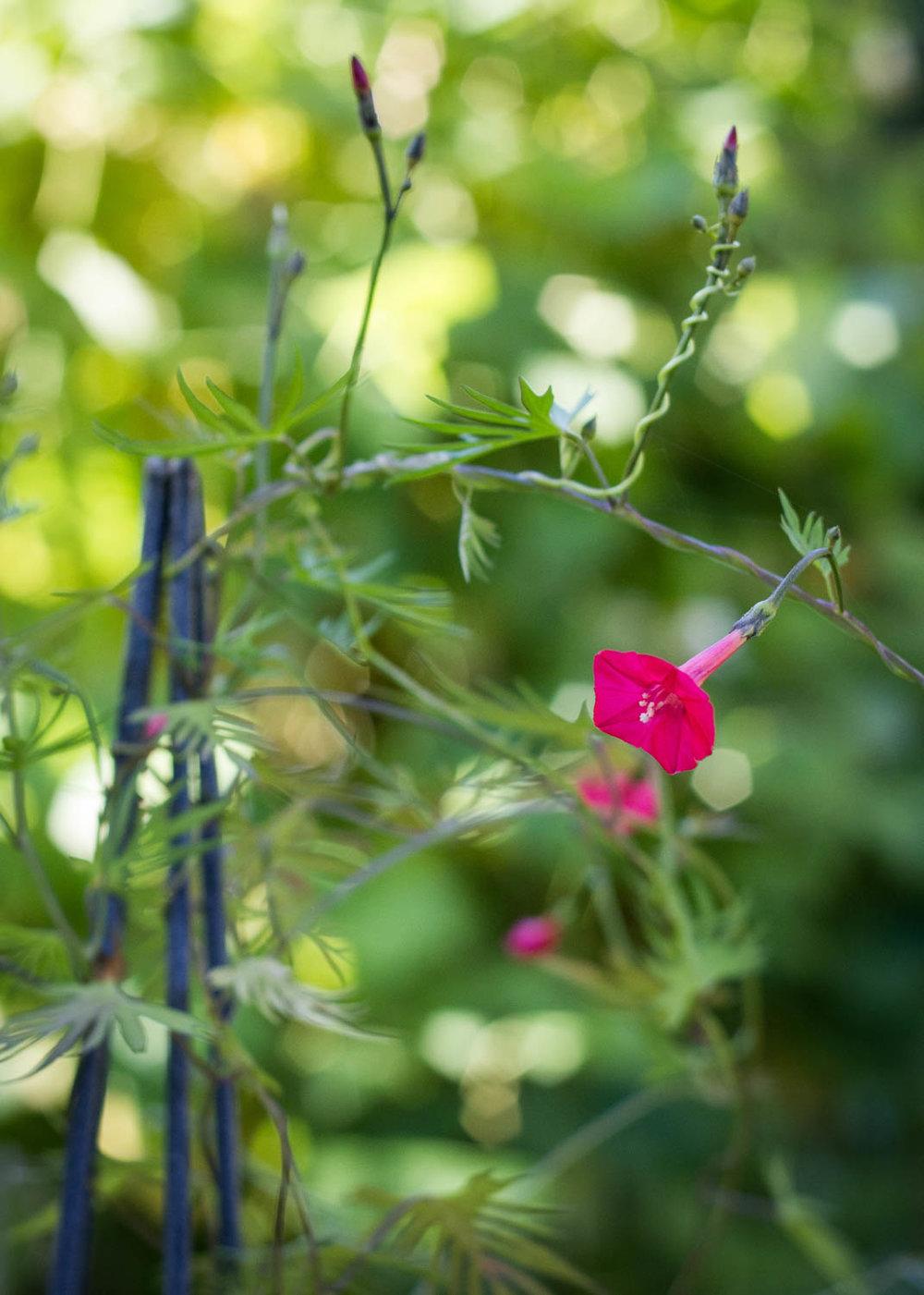 Garden--4.jpg