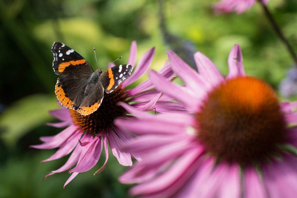 Garden--6.jpg