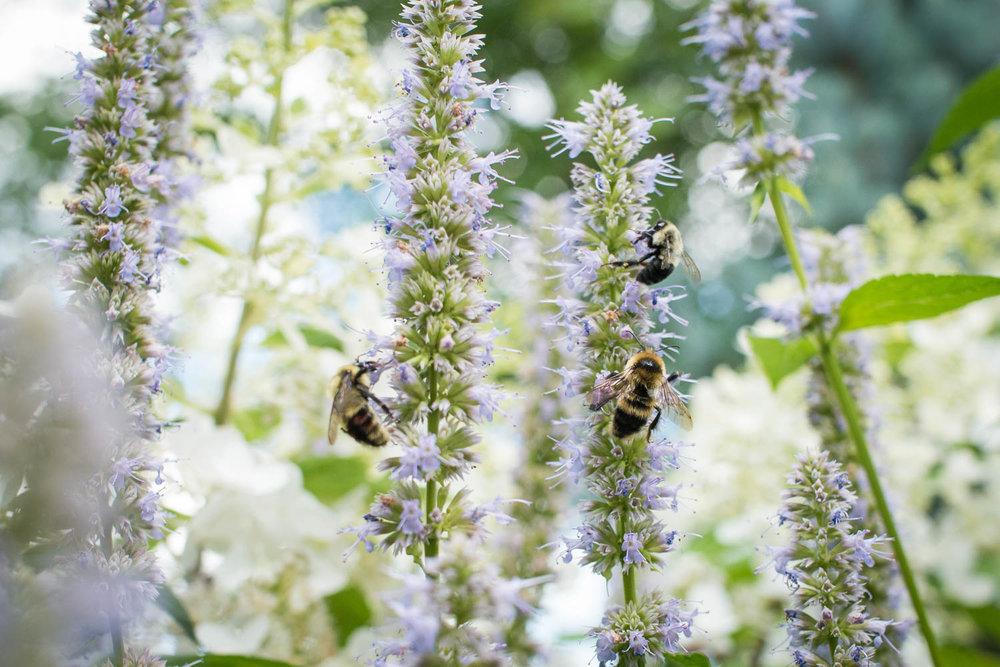 Garden--7.jpg