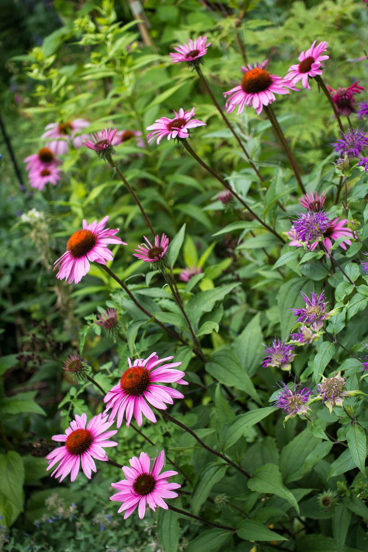 Garden--28.jpg