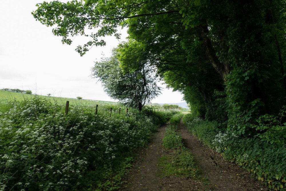 Countryside-3.jpg