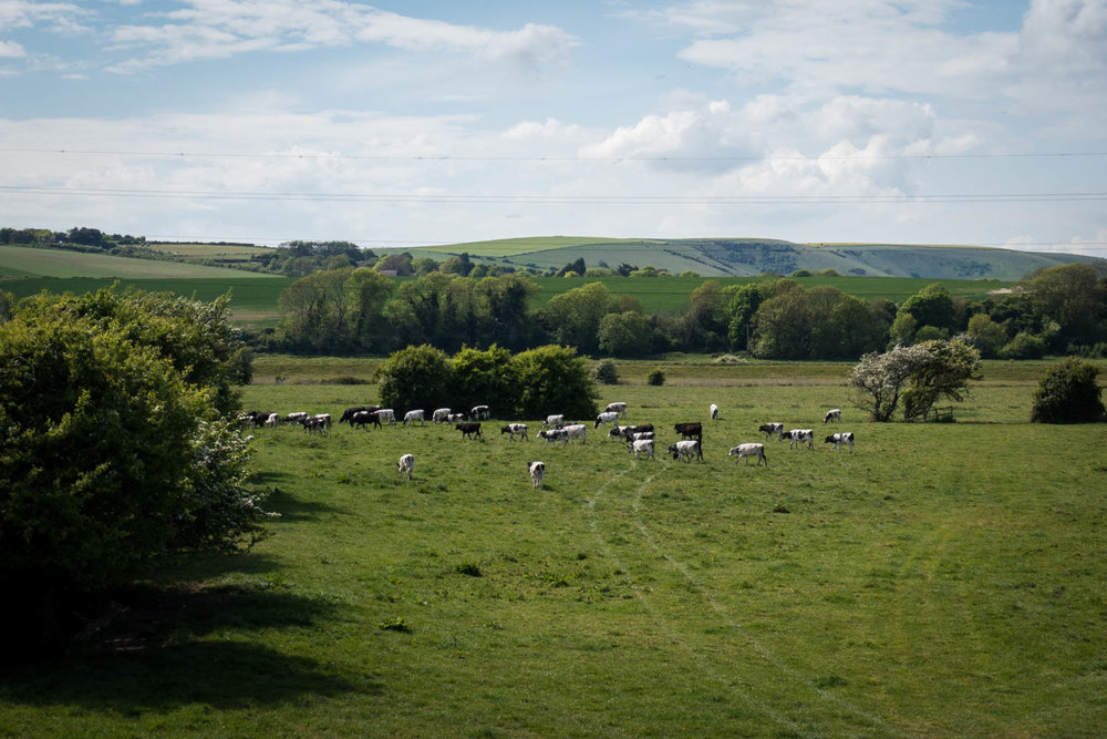 Countryside-6.jpg