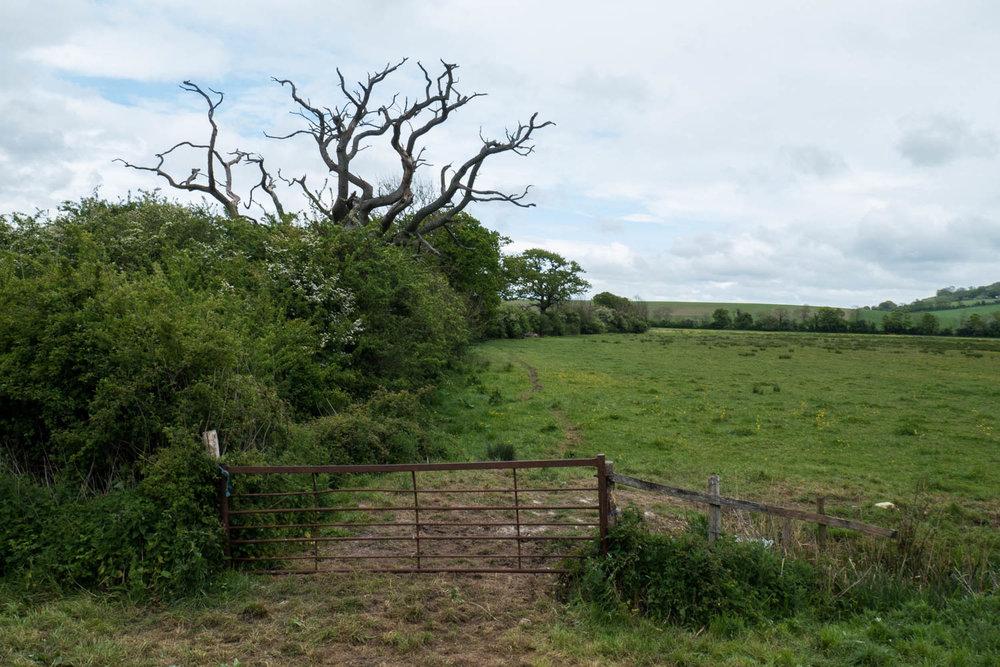 Countryside-9.jpg