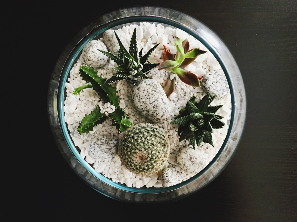 Our new terrarium.