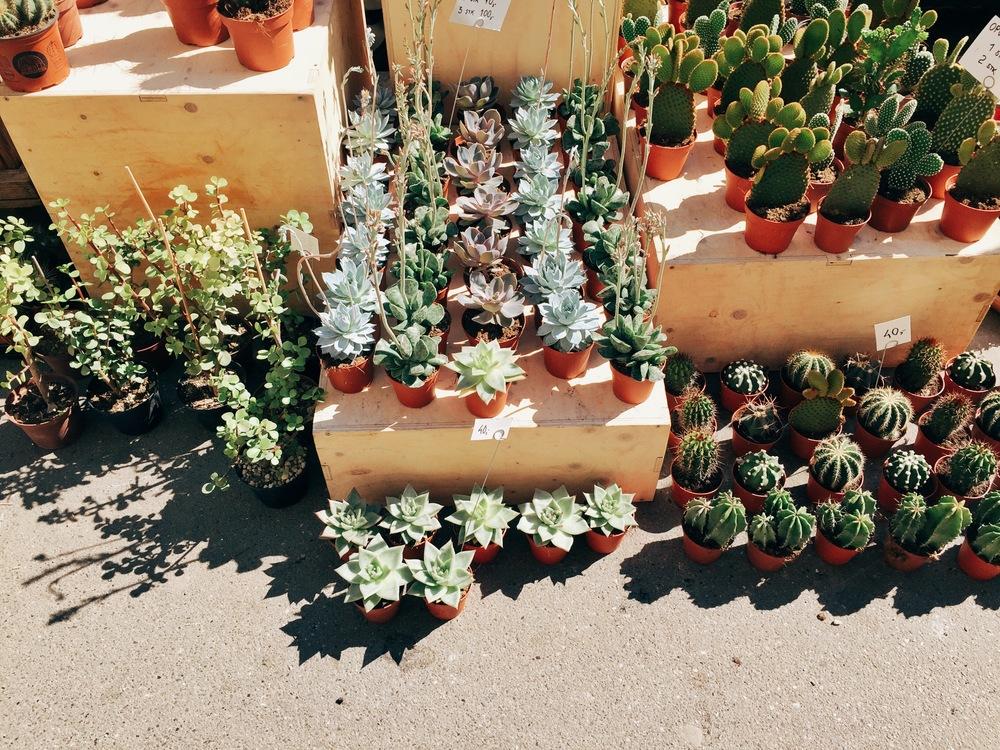 Kaktus København.