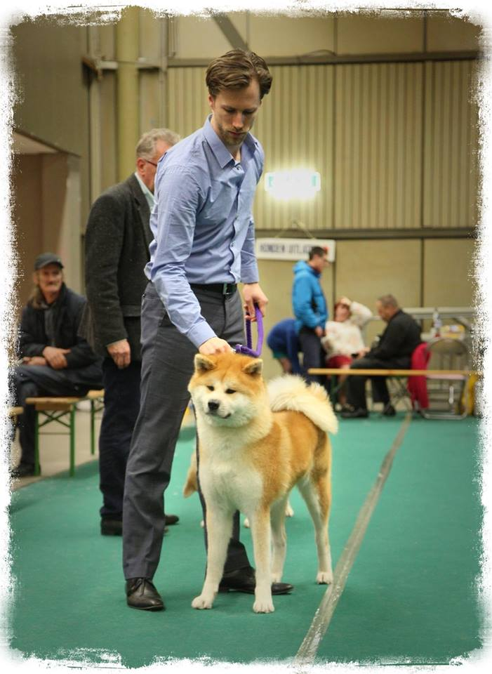 Chihiro at Eindhoven International Dog Show 2014
