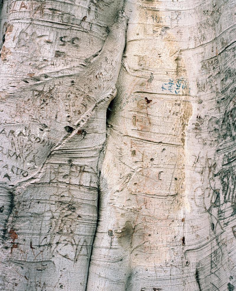 olivereglin-markings-02-manja.jpg