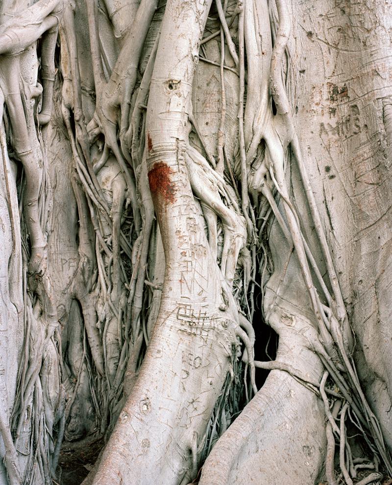 olivereglin-markings-03-maroota.jpg
