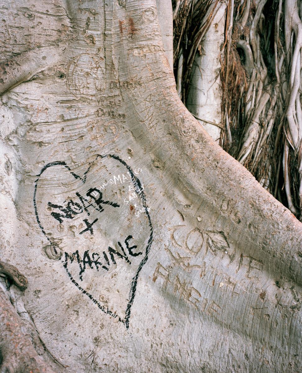 olivereglin-markings-08-girrakool.jpg