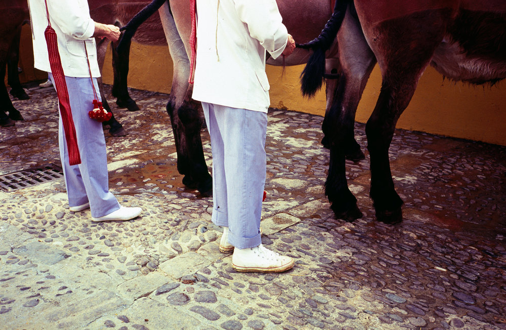 Andalusian Horses, so Carefully Dressed, Seville, 2017