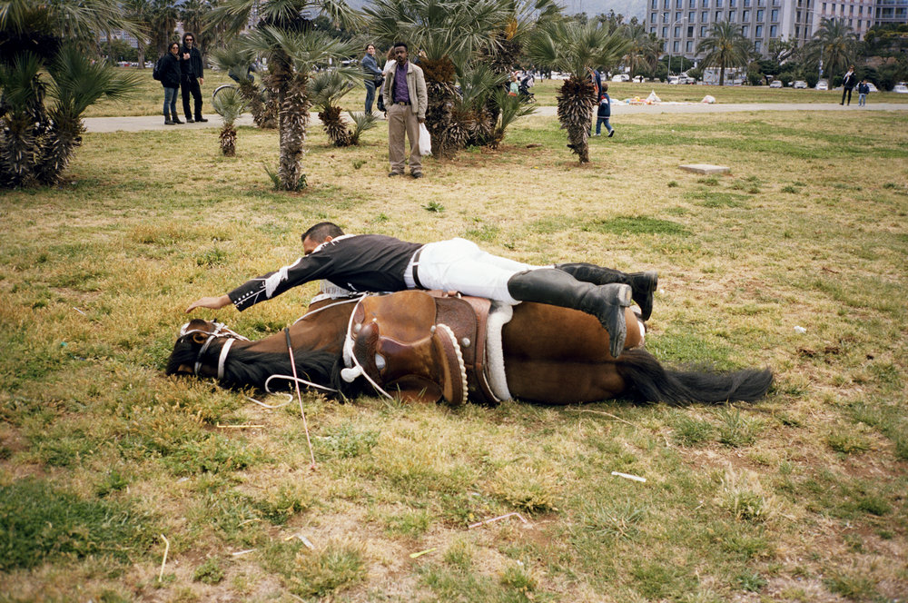 Il Cavallo, Palermo, 2015