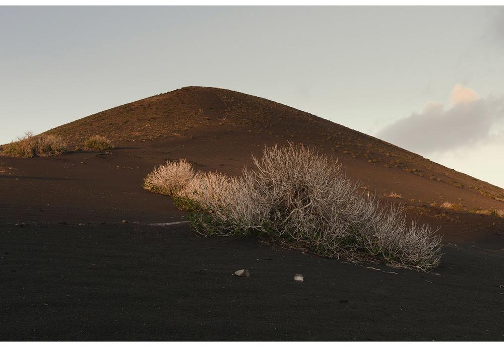 Higuera La Geria Lanzarote