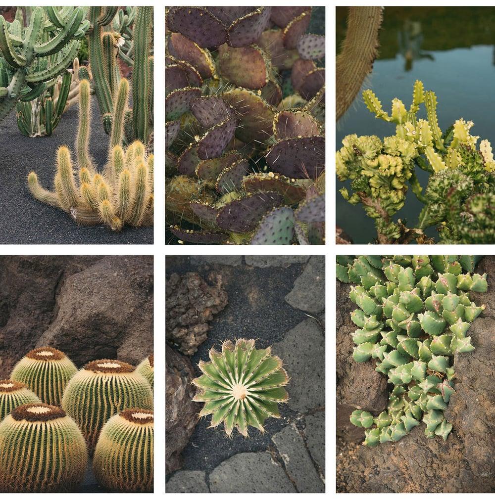 021-boda-diseño-jardin-cactus.jpg