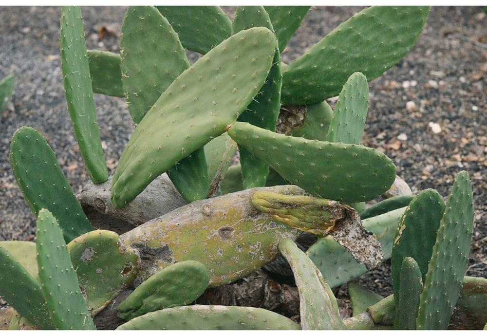 041-boda-diseño-jardin-cactus.jpg
