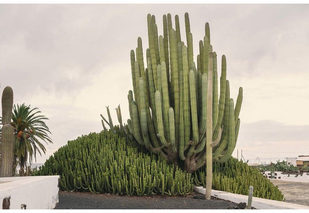 045-boda-diseño-jardin-cactus.jpg