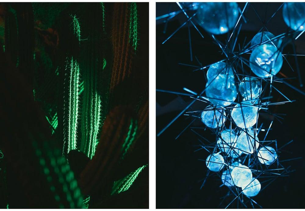063-boda-diseño-jardin-cactus.jpg