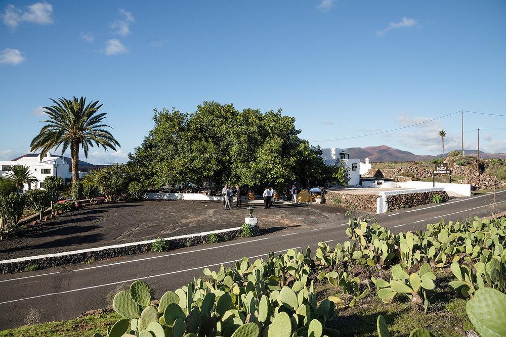 Lanzarote 12 NOV - 6.JPG
