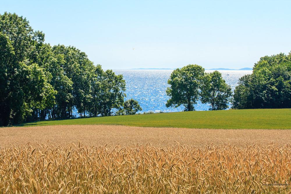 Jeløya har en av landets rikeste flora, med blant annetblåveisogmisteltein. På øya finnes flere landskapsvernområder og naturreservater som følge av den enestående naturen. Øya har flotte turområder med sine alleer og omfattende sti-systemer, herunder kyststien.