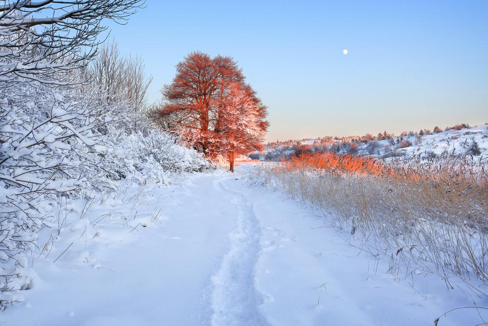 Vinter (2).jpg
