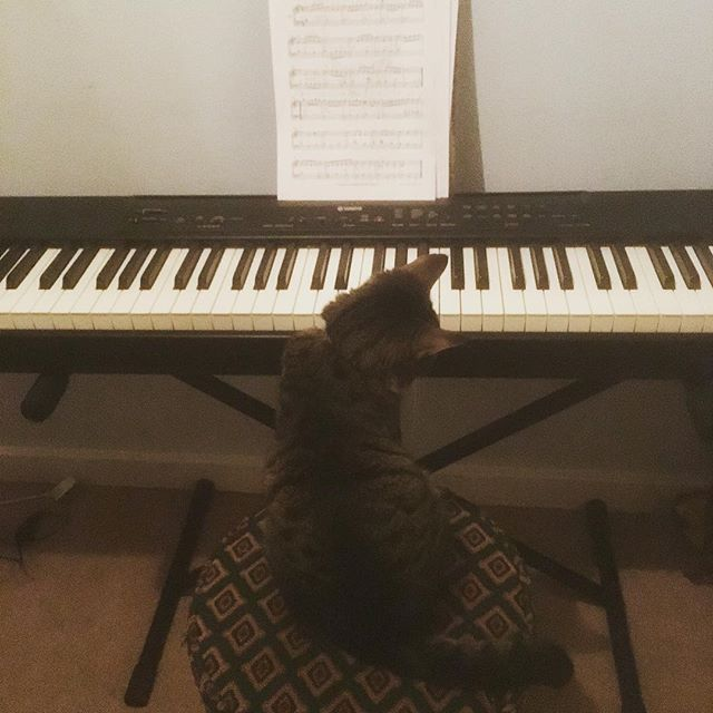 My cat Juju trying to get to grips with Mozart. He did a great bassline - although somewhat more expressionist... #catsofinstagram 🎹 🐱 🎶
