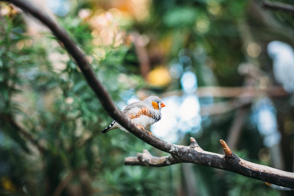 BRITNEY-GILL-PHOTOGRAPHY-IMG_7707.jpg