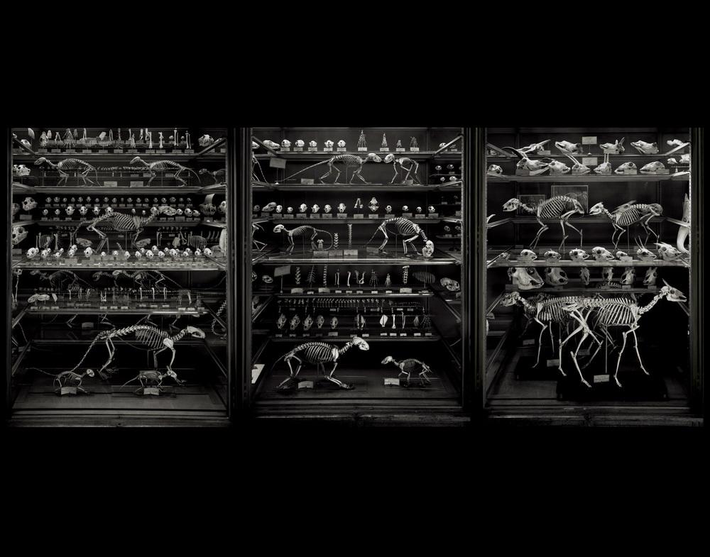 Animal Logic, 2005